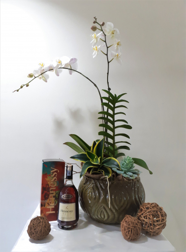 White Phalaenopsis Orchids With Hennessy