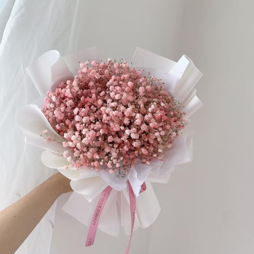 BABY BREATH | Pastel Pink