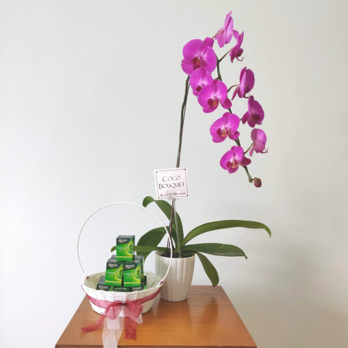 Orchid with Brands chicken essence