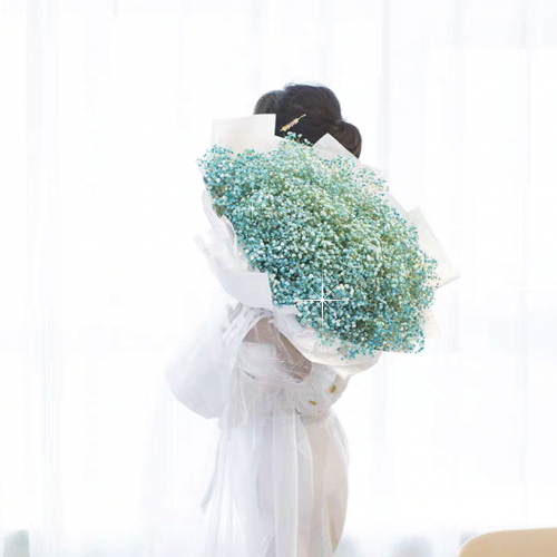 Giant Blue Baby Breath