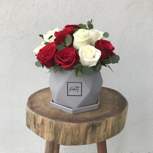 Red white roses pot